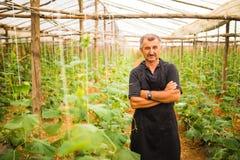 Uomo di medio evo con le verdure attraversate dei cetrioli delle mani in una serra agricoltura Immagini Stock Libere da Diritti