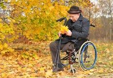 Uomo disabile in una sedia a rotelle che raccoglie le foglie Fotografie Stock