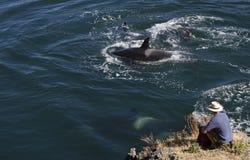 Uomo e balene Fotografia Stock Libera da Diritti