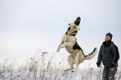Uomo e cane Alsatian Fotografia Stock