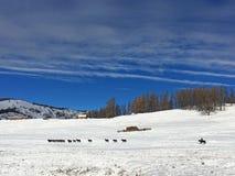 Uomo e cavalli sul pascolo di Kanas nell'inverno Fotografia Stock