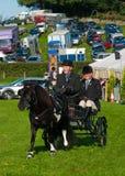 Uomo e donna in cavallo e carrello Fotografie Stock Libere da Diritti