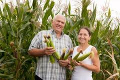 Uomo e donna con le spighe di frumento Fotografie Stock Libere da Diritti