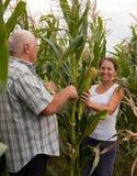Uomo e donna con le spighe di frumento Immagine Stock