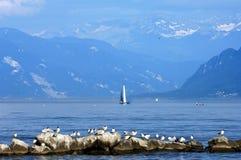 Uomo ed animale in décor e nel lago Lemano della montagna Immagini Stock Libere da Diritti