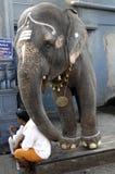 Uomo ed elefante al tempiale Madura di Menakshi Fotografia Stock Libera da Diritti