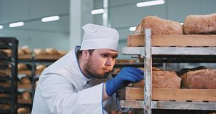 Uomo grasso carismatico del panettiere che guarda attraverso gli scaffali e sistemare il pane perfetto molto con attenzione organ video d archivio
