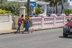 Uomo locale che spinge un carrello delle noci di cocco in Barbados Immagine Stock