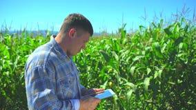 Uomo maschio dell'agricoltore facendo uso del computer digitale della compressa, tecnologia nel campo di grano, controllante qual archivi video
