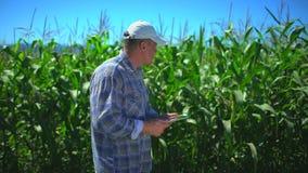 Uomo maschio dell'agricoltore facendo uso del computer digitale della compressa, tecnologia nel campo di grano, controllante qual stock footage