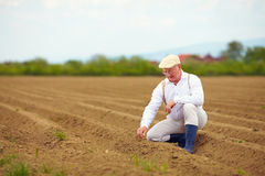 Uomo maturo, agricoltore sul campo arabile, controllante la crescita di pianta Immagine Stock Libera da Diritti