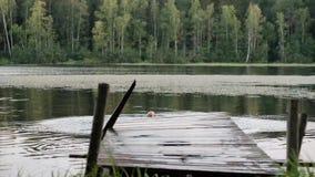 Uomo maturo caucasico che salta dal pilastro di legno in lago stock footage