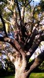 Uomo misterioso dell'albero Fotografia Stock Libera da Diritti