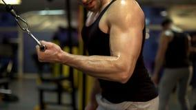 Uomo muscolare che esamina il suo bicipite durante i tirata-bassi della palestra, svago di forma fisica, sport immagine stock libera da diritti
