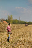 Uomo nel campo di cereale Immagine Stock