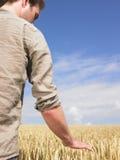 Uomo nel campo di frumento Immagini Stock Libere da Diritti