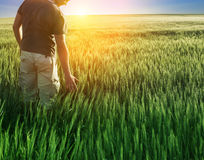 Uomo nel campo di frumento e nella luce solare immagini stock