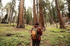 Uomo nel parco nazionale della sequoia in California, U.S.A. fotografia stock libera da diritti