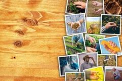 Uomo nell'agricoltura e nell'agricoltura, collage della foto con lo spazio della copia Immagine Stock Libera da Diritti