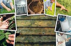 Uomo nell'agricoltura e nell'agricoltura, collage della foto con lo spazio della copia Immagini Stock Libere da Diritti