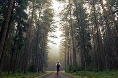 Uomo nella foresta nebbiosa di autunno immagine stock libera da diritti