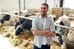 Uomo o agricoltore con le mucche in stalla sull'azienda lattiera Fotografia Stock