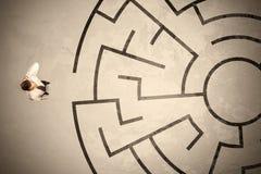 Uomo perso di affari che cerca un modo in labirinto circolare Immagine Stock Libera da Diritti