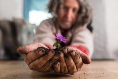 Uomo più anziano che dà un piccolo fiore porpora Fotografia Stock Libera da Diritti