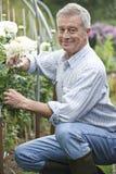 Uomo senior che coltiva i fiori in giardino Fotografia Stock Libera da Diritti