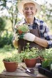 Uomo senior con le erbe fresche Immagini Stock Libere da Diritti