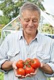Uomo senior in serra con l'uomo nazionale di TomatoesSenior nel G immagine stock