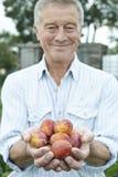 Uomo senior su assegnazione che tiene le mele di recente selezionate Immagini Stock Libere da Diritti