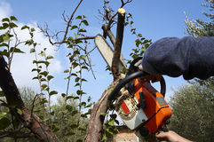 Uomo senza la protezione necessaria, albero dei tagli con la motosega Fotografie Stock Libere da Diritti