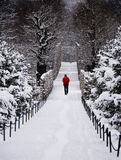 Uomo solo che cammina attraverso la foresta nevosa Fotografie Stock