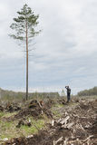 Uomo solo fra legname abbattuto Un albero alto Immagini Stock Libere da Diritti