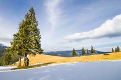 Uomo solo in montagne che stanno sotto i pini nella vittoria luminosa fotografie stock