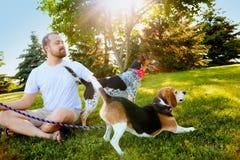 Uomo sorridente che tiene i cani sul guinzaglio nell'estate Immagini Stock Libere da Diritti