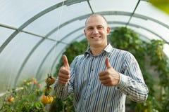Uomo sorridente in pianta di pomodori Immagini Stock Libere da Diritti