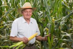 Uomo sul cereale di campo con le spighe di frumento Fotografia Stock