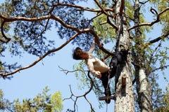 Uomo sull'albero fotografia stock libera da diritti