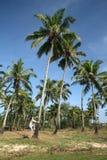 Uomo sull'albero di noce di cocco Immagine Stock