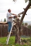 Uomo sulle filiali di albero di sawing della scaletta Immagini Stock