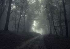 Uomo in una foresta con nebbia immagine stock libera da diritti