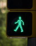 Uomo verde isolato Immagine Stock
