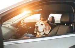 Uomo vestito caldo che gode della guida di veicoli moderna con il suo cane da lepre fotografia stock
