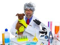 Uomo veterinario sciocco dello scienziato pazzo della nullità con il cane al laboratorio Immagine Stock