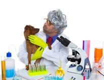 Uomo veterinario sciocco dello scienziato pazzo della nullità con il cane al laboratorio Fotografia Stock Libera da Diritti
