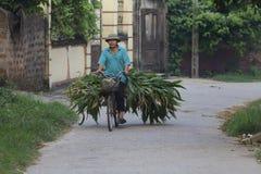 Uomo vietnamita sulla bicicletta Immagini Stock