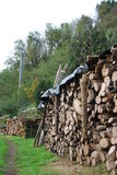 Uorganizowany rżnięty drewno Obrazy Royalty Free