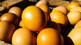 Uova arrostite sul mattone caldo da vendere fotografia stock libera da diritti